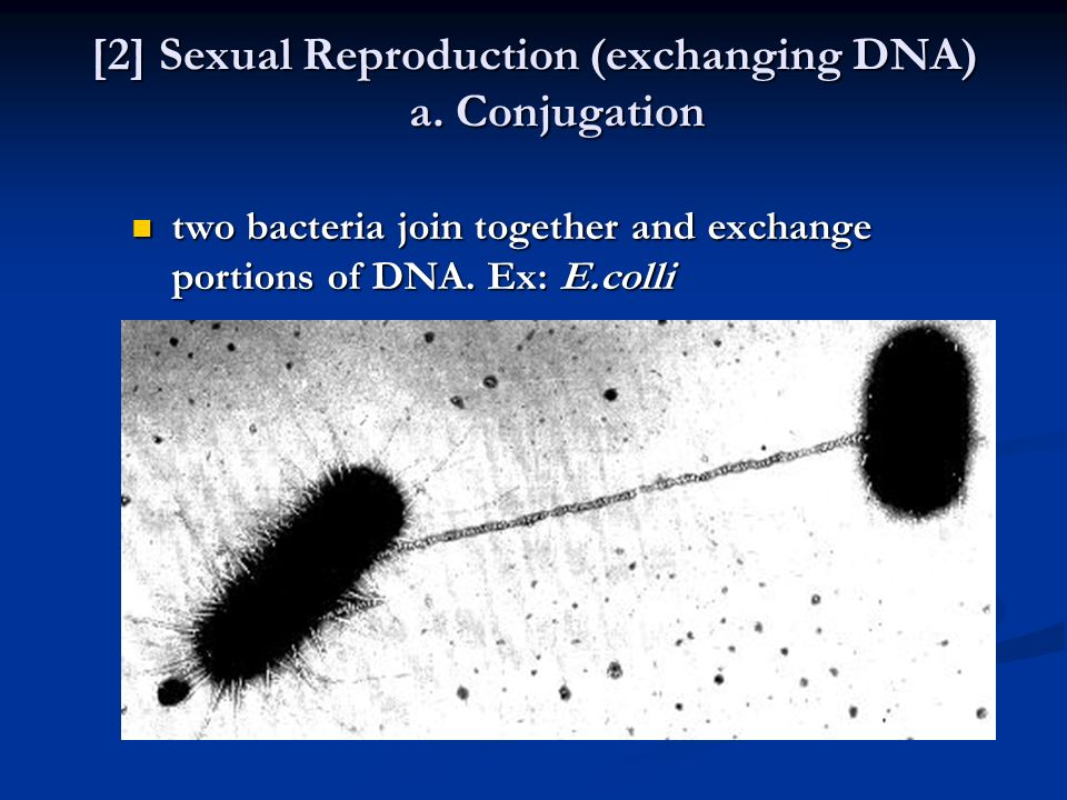 [2] Sexual Reproduction (exchanging DNA) a. Conjugation